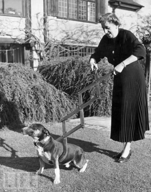 Attrape chien - 1940