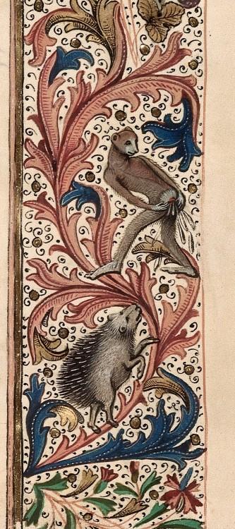 Rencontre d'un singe et d'un hérisson