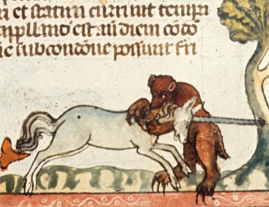 Un ours attaque une licorne