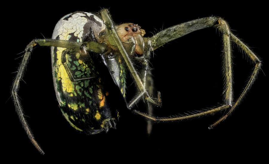 Arthropode-Macro-25