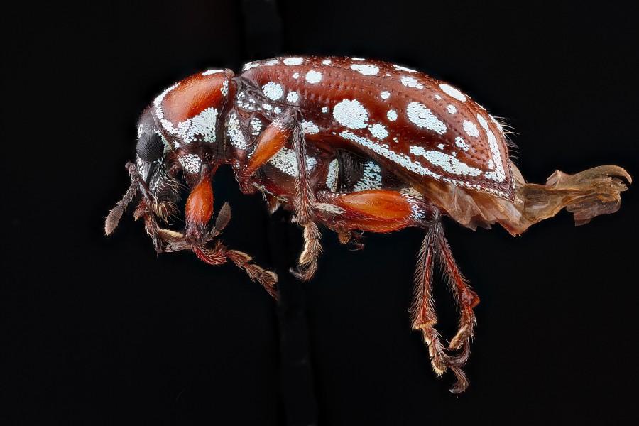 Arthropode-Macro-35