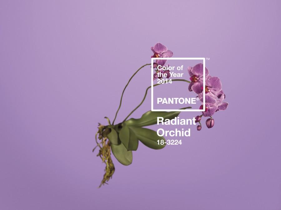 radiant-ochid-couleur-pantone-2014-02