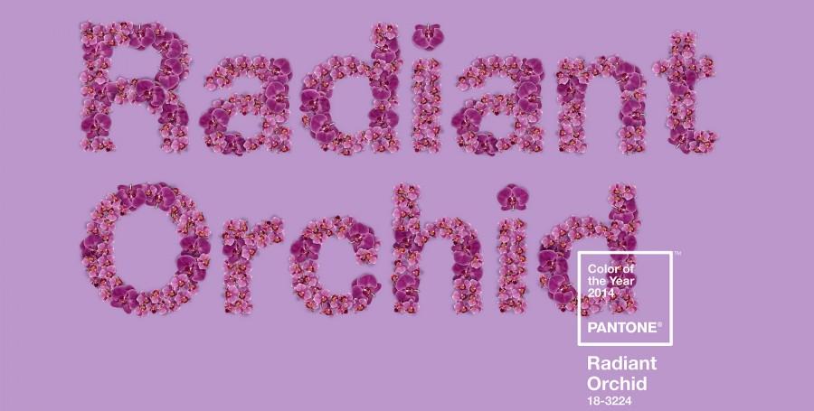 radiant-ochid-couleur-pantone-2014-08