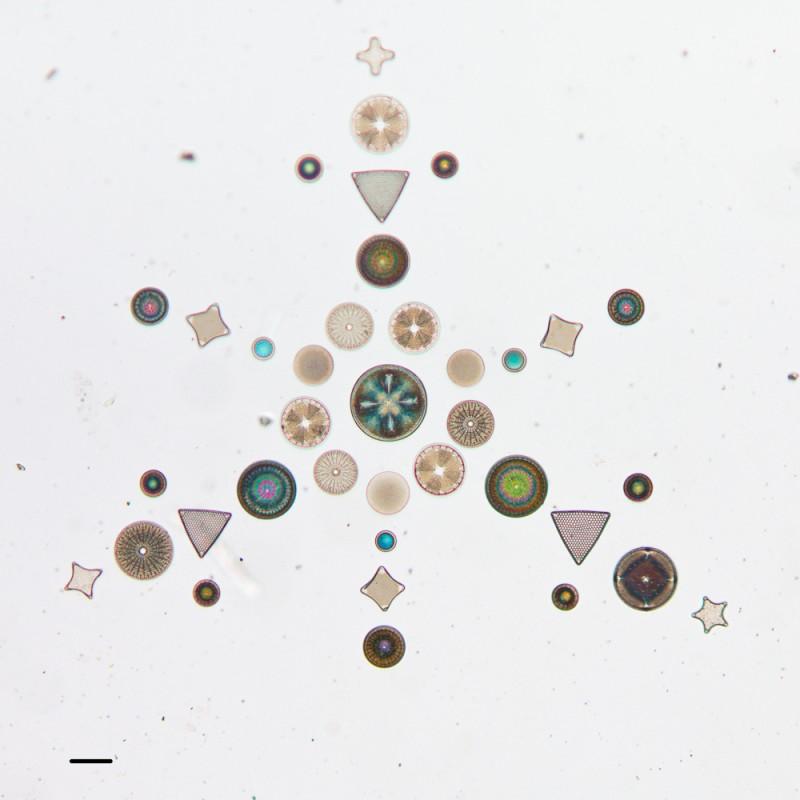 algue-microscope-geometrie-03