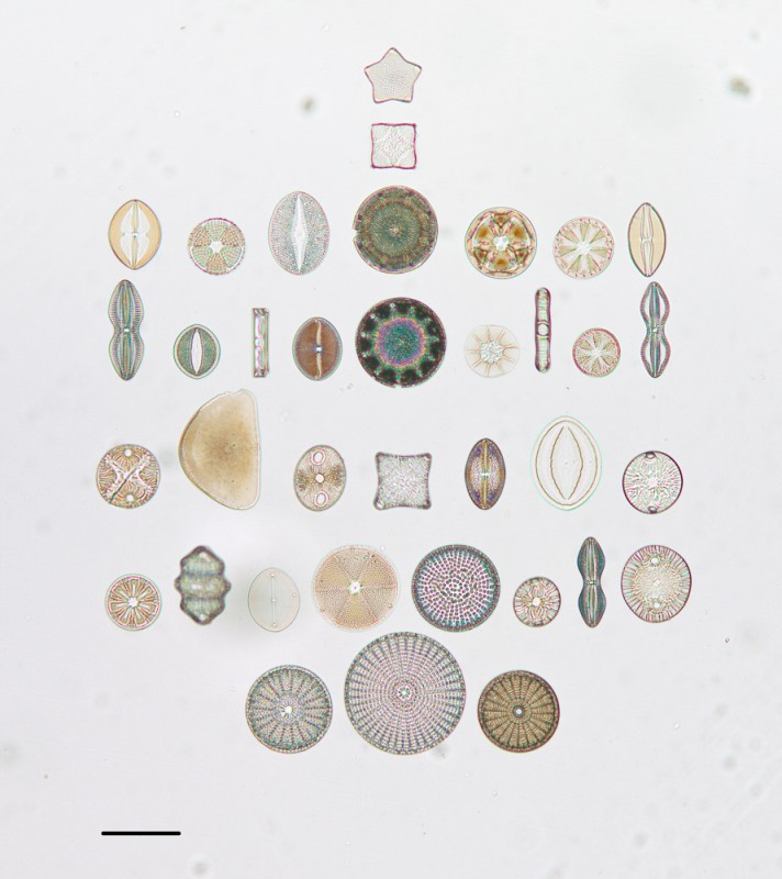 algue-microscope-geometrie-07
