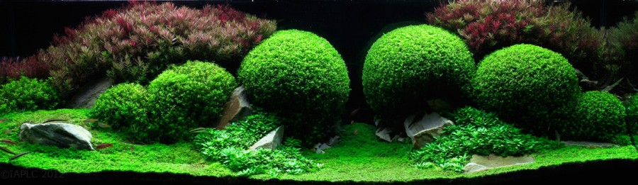 aquarium 02 900x261 Des plantes daquariums  divers