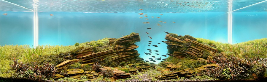 aquarium plante decors 04 900x279 Des plantes daquariums  divers
