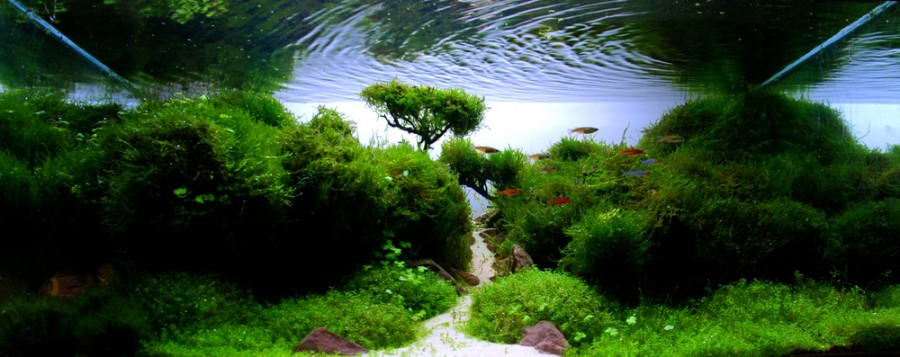 aquarium plante decors 06 900x357 Des plantes daquariums  divers