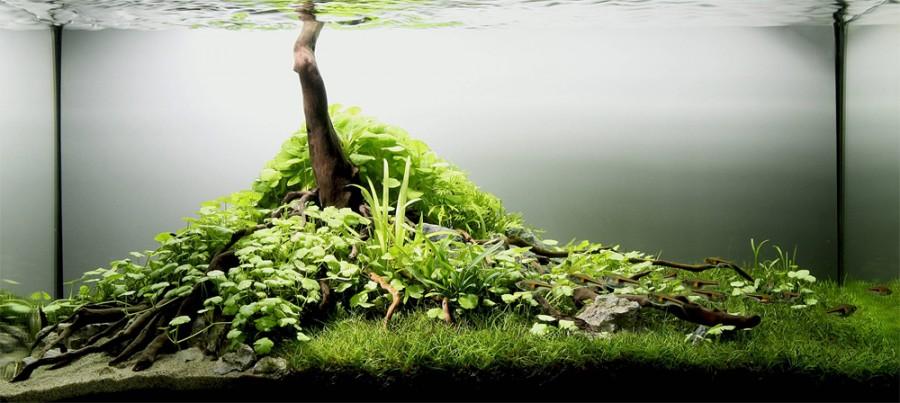 aquarium plante decors 07 900x403 Des plantes daquariums  divers