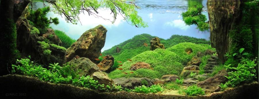 aquarium plante decors 08 900x345 Des plantes daquariums  divers