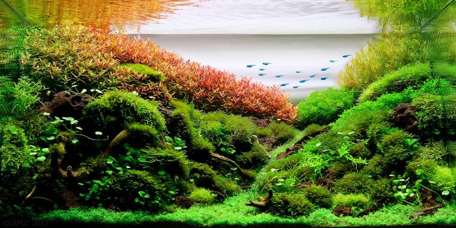 aquarium plante decors 09 900x450 Des plantes daquariums  divers