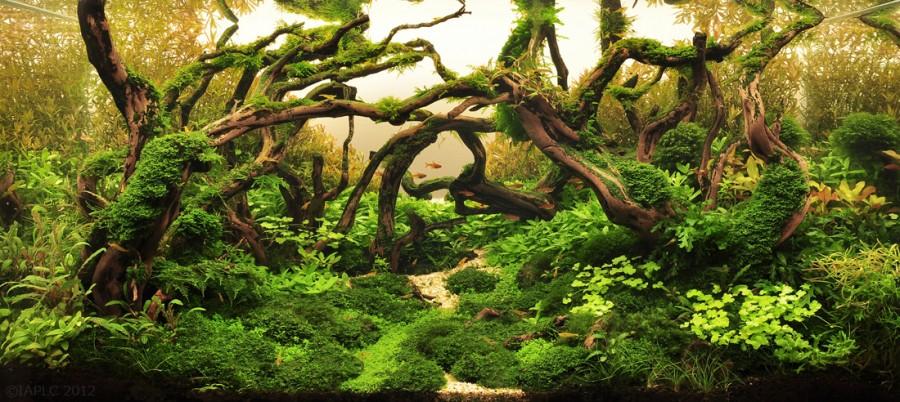 aquarium plante decors 10 900x402 Des plantes daquariums  divers
