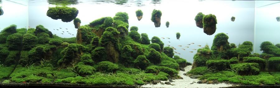 aquarium plante decors 11 900x286 Des plantes daquariums  divers