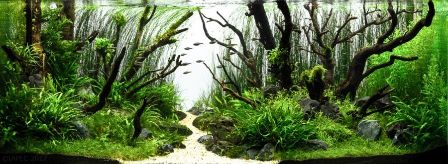 aquarium plante decors 12 900x330 Des plantes daquariums  divers