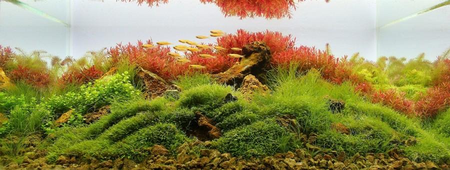 aquarium plante decors 13 900x341 Des plantes daquariums  divers
