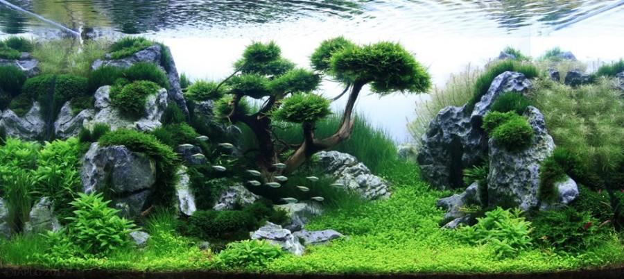 aquarium plante decors 14 900x402 Des plantes daquariums  divers