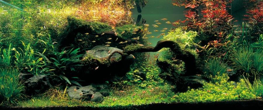 aquarium plante decors 15 900x378 Des plantes daquariums  divers