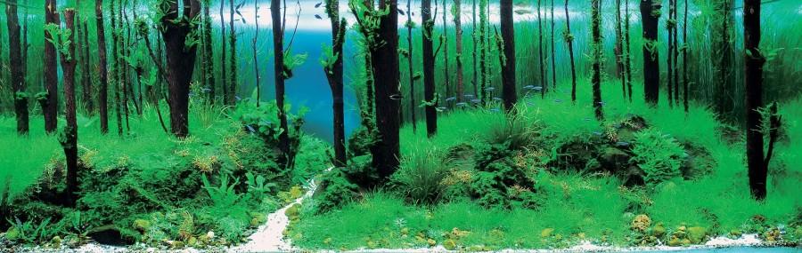 aquarium plante decors 16 900x285 Des plantes daquariums  divers