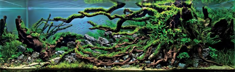 aquarium plante decors 17 900x277 Des plantes daquariums  divers