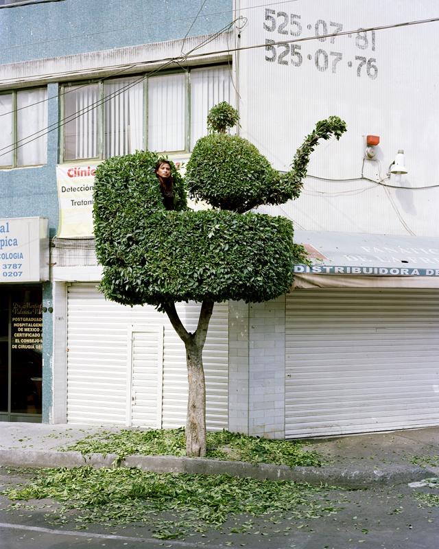 gens-arbre-mexico-02
