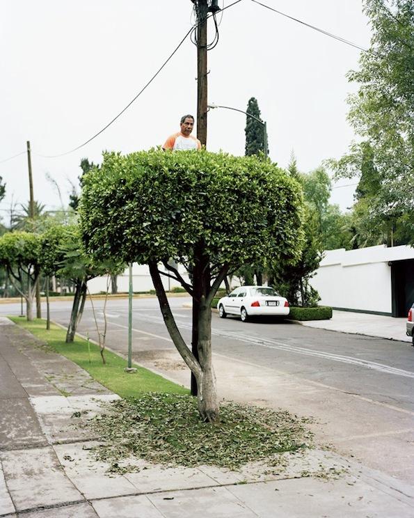 gens-arbre-mexico-03