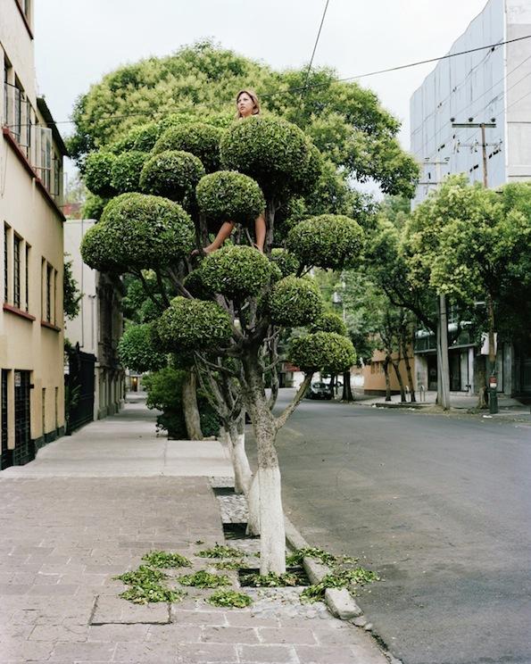 gens-arbre-mexico-04