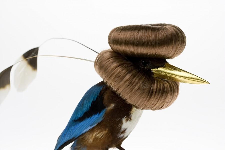 oiseau-augmente-01