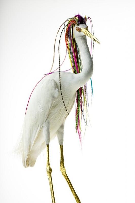 oiseau-augmente-02