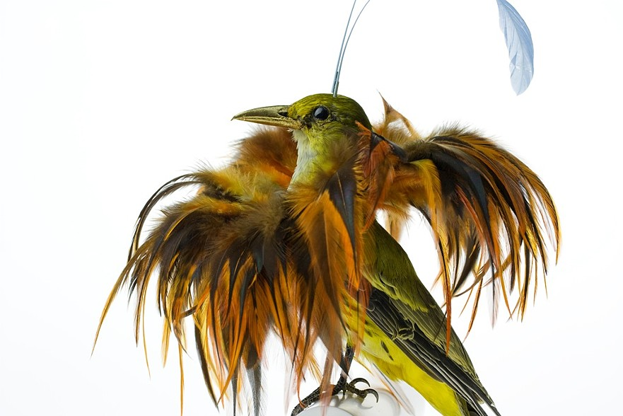 oiseau-augmente-04