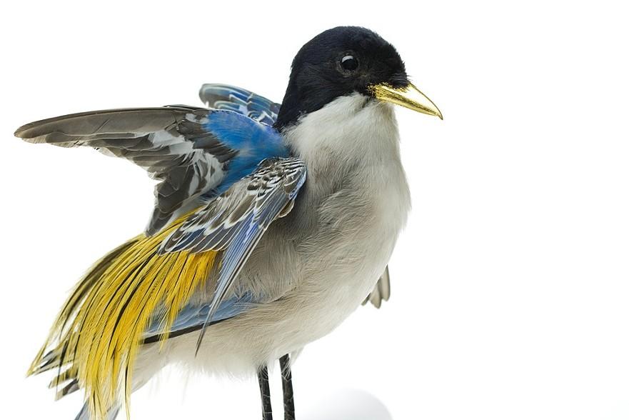 oiseau-augmente-05
