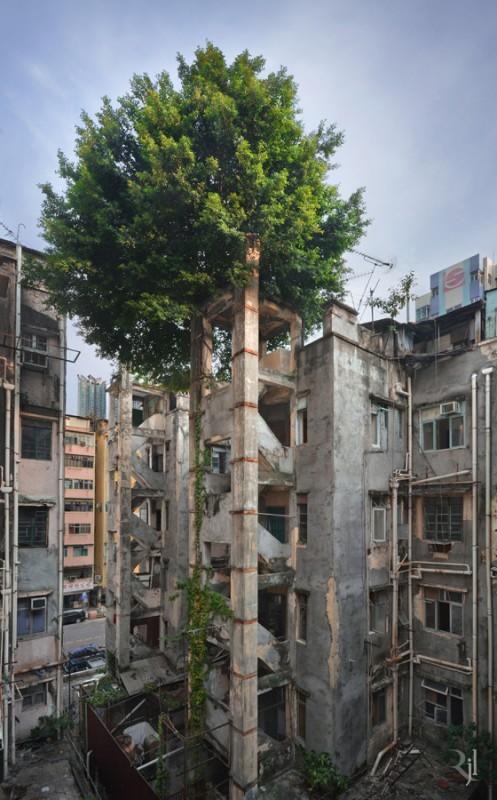 arbre-honk-kong-01