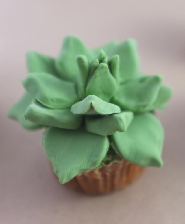 cactus-gateau-05