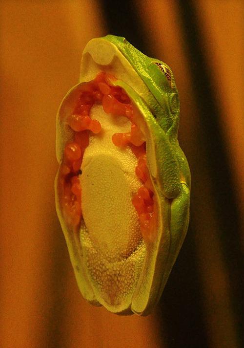 grenouille-vitre